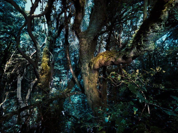 Jenny Cremer - Anke Luckmann – Trees